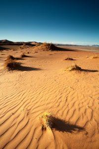 Dune 17