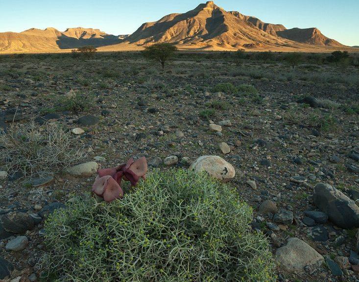 Hauchabfontein Camping