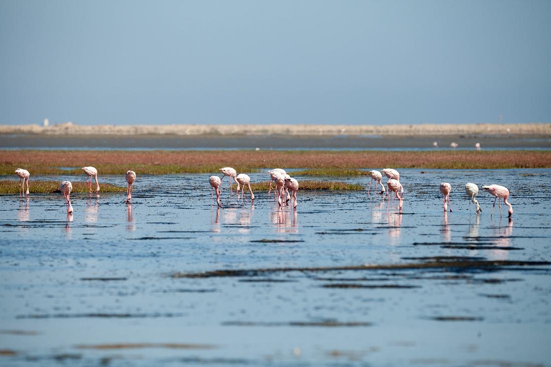 Flamingo, Walvis Bay, Swakopmund, Namibia