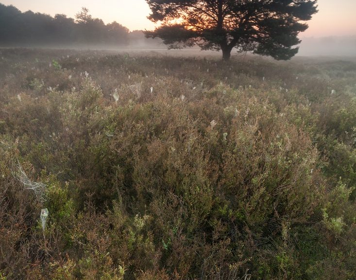 Mehliger Heide
