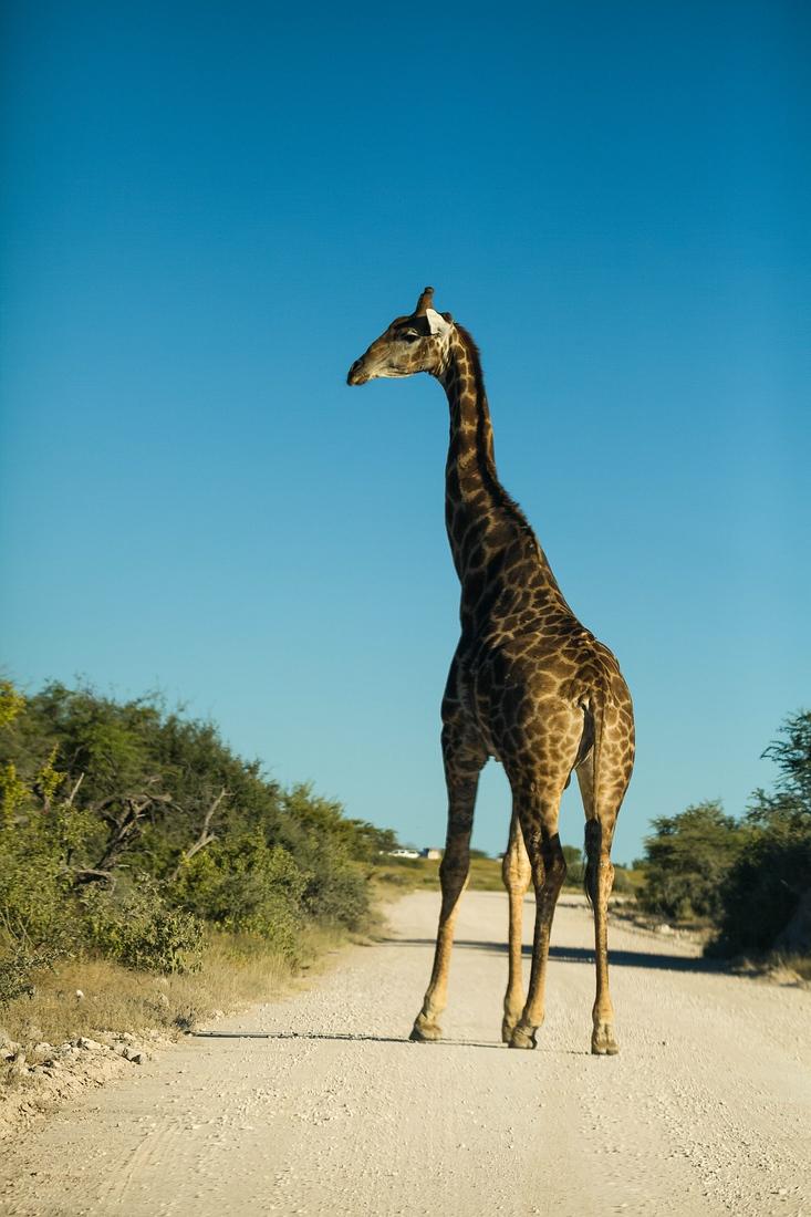 Dik Dik Drive, Etosha Nationalpark