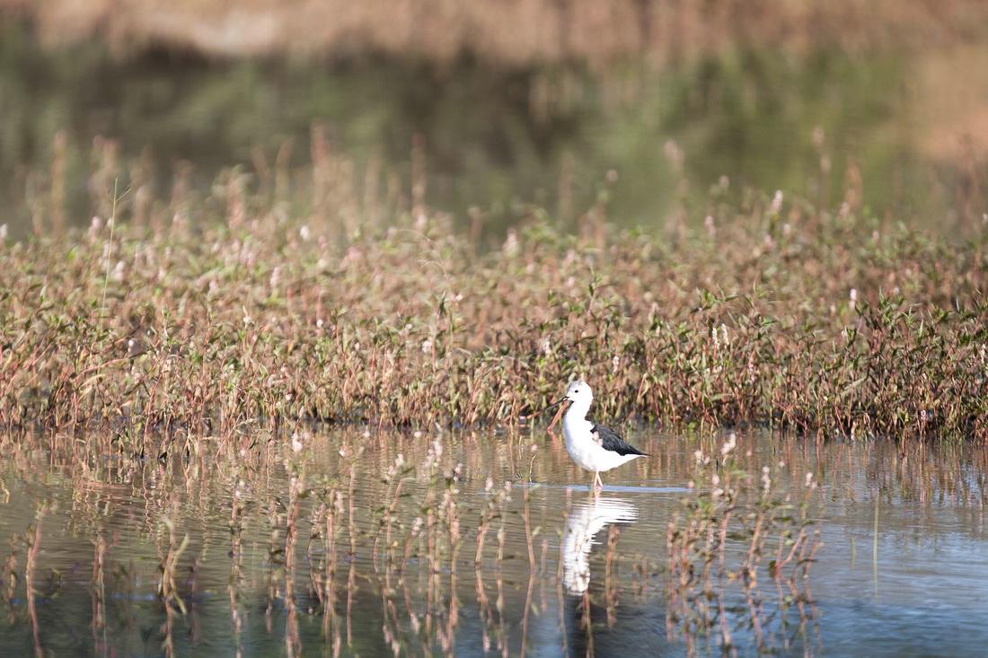 Vogel, Namibia